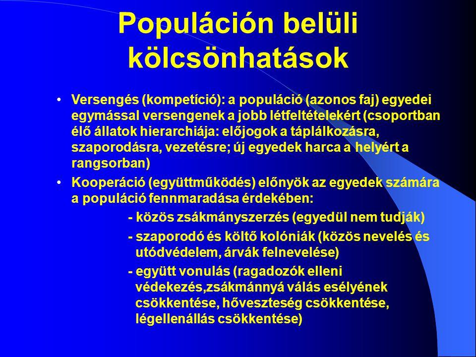 Populáción belüli kölcsönhatások Versengés (kompetíció): a populáció (azonos faj) egyedei egymással versengenek a jobb létfeltételekért (csoportban él