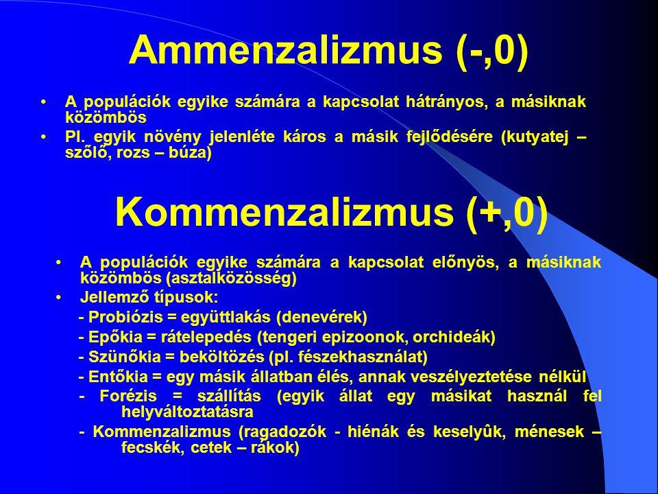 Ammenzalizmus (-,0) A populációk egyike számára a kapcsolat hátrányos, a másiknak közömbös Pl. egyik növény jelenléte káros a másik fejlődésére (kutya