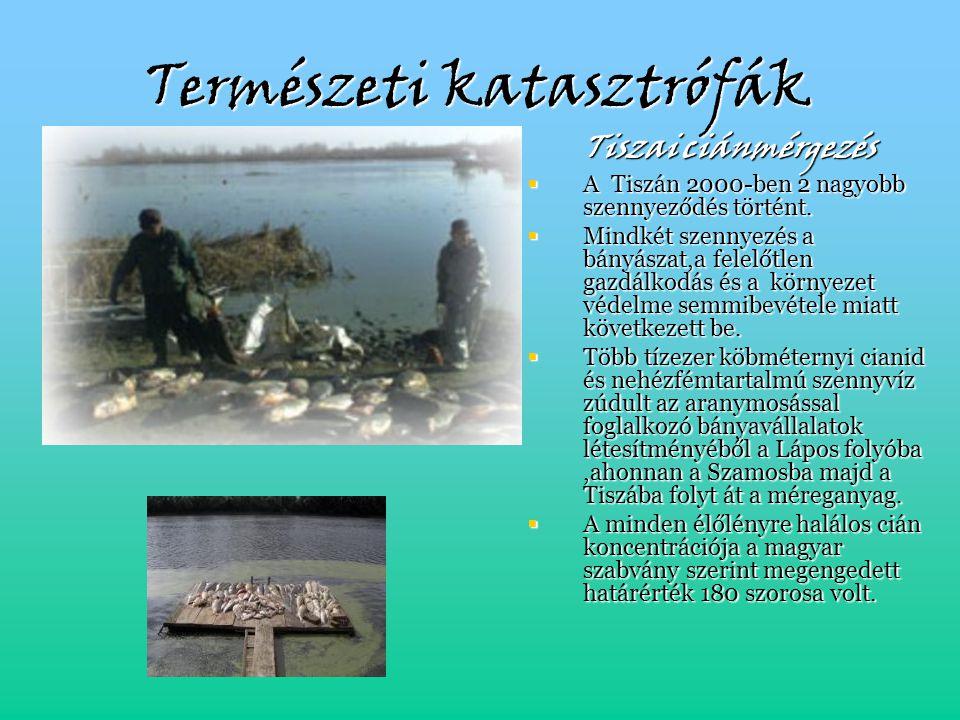 Természeti katasztrófák Tiszai ciánmérgezés  A Tiszán 2000-ben 2 nagyobb szennyeződés történt.  Mindkét szennyezés a bányászat,a felelőtlen gazdálko