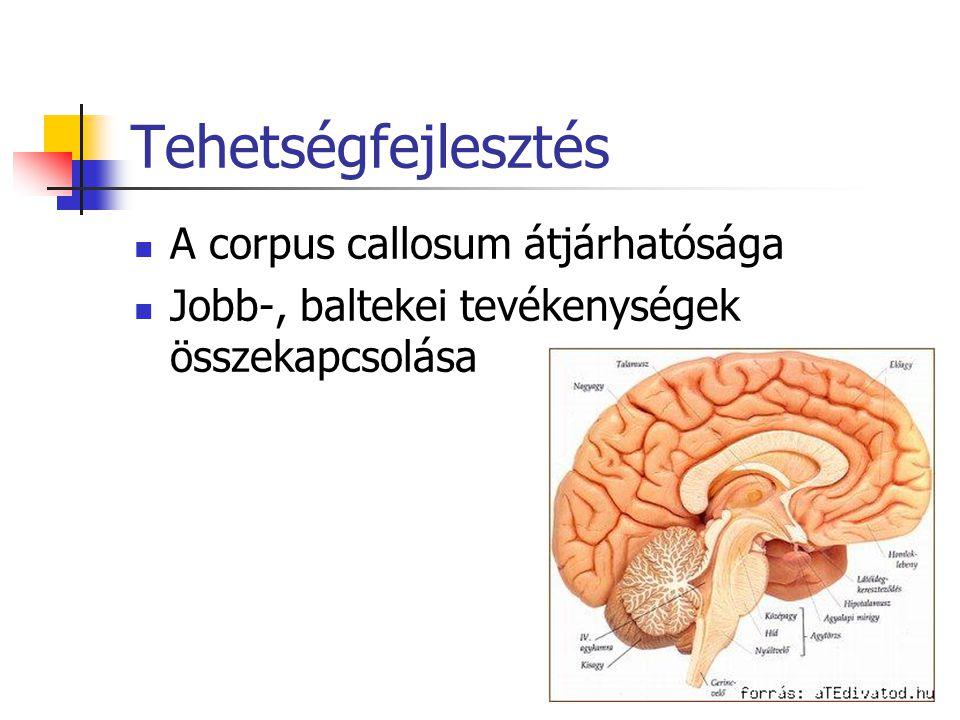 Tehetségfejlesztés A corpus callosum átjárhatósága Jobb-, baltekei tevékenységek összekapcsolása