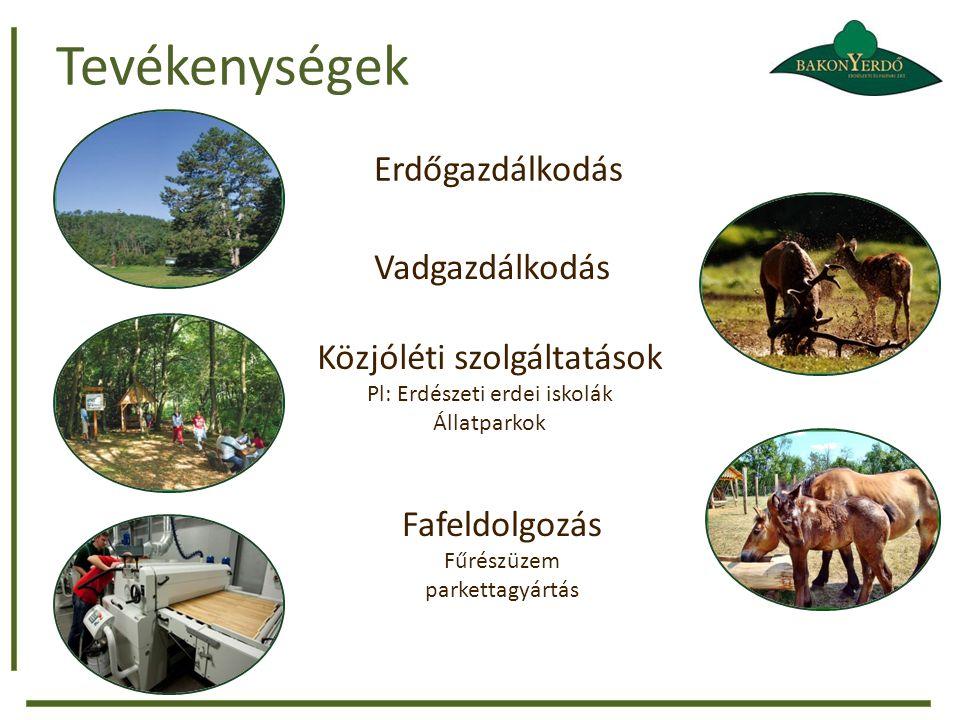 Tevékenységek Erdőgazdálkodás Vadgazdálkodás Közjóléti szolgáltatások Pl: Erdészeti erdei iskolák Állatparkok Fafeldolgozás Fűrészüzem parkettagyártás