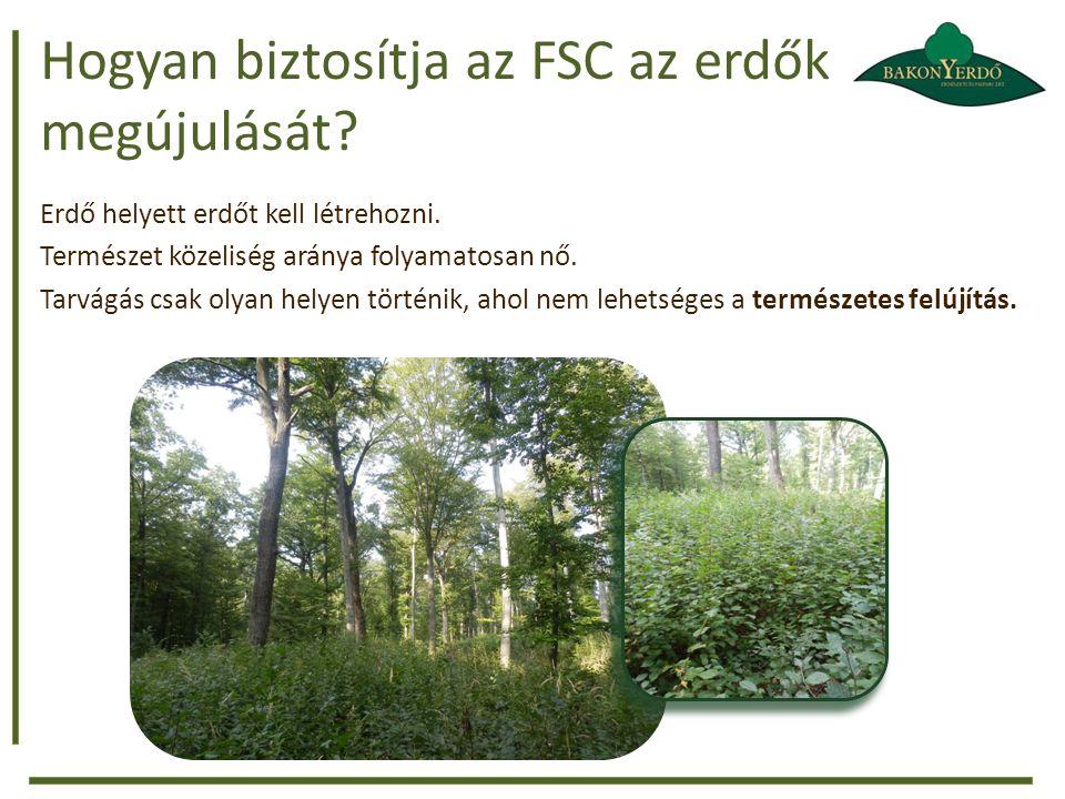 Hogyan biztosítja az FSC az erdők megújulását.Erdő helyett erdőt kell létrehozni.
