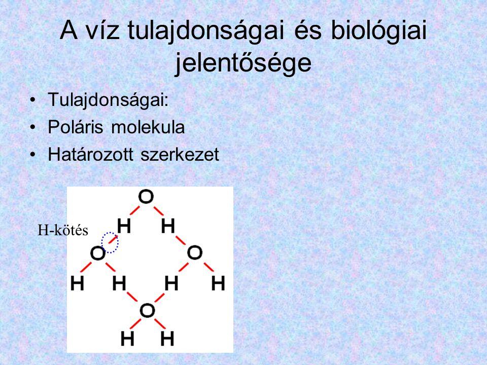 A víz tulajdonságai és biológiai jelentősége Tulajdonságai: Poláris molekula Határozott szerkezet H-kötés