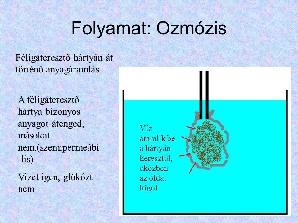Folyamat: Ozmózis Féligáteresztő hártyán át történő anyagáramlás Víz Glükóz F.Á.E.H.