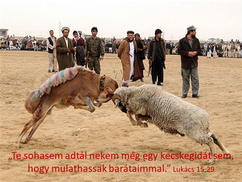 """""""Te sohasem adtál nekem még egy kecskegidát sem, hogy mulathassak barátaimmal."""" Lukács 15,29"""