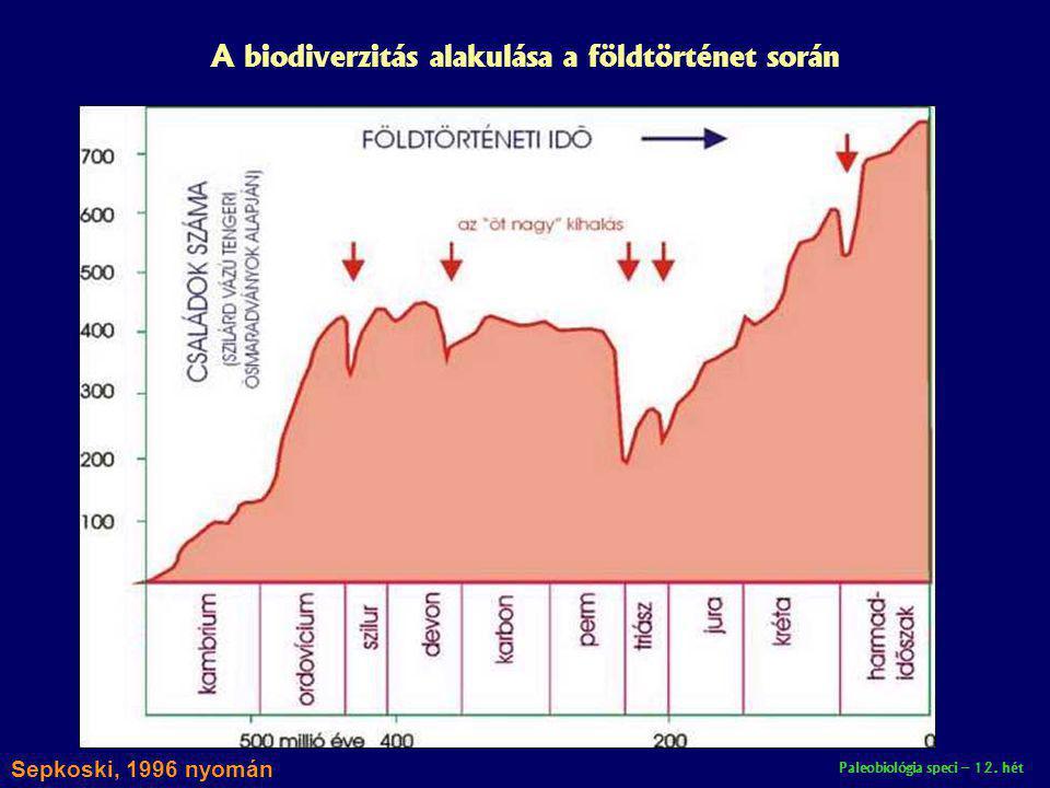 Paleobiológia speci – 12. hét A biodiverzitás alakulása a földtörténet során Sepkoski, 1996 nyomán