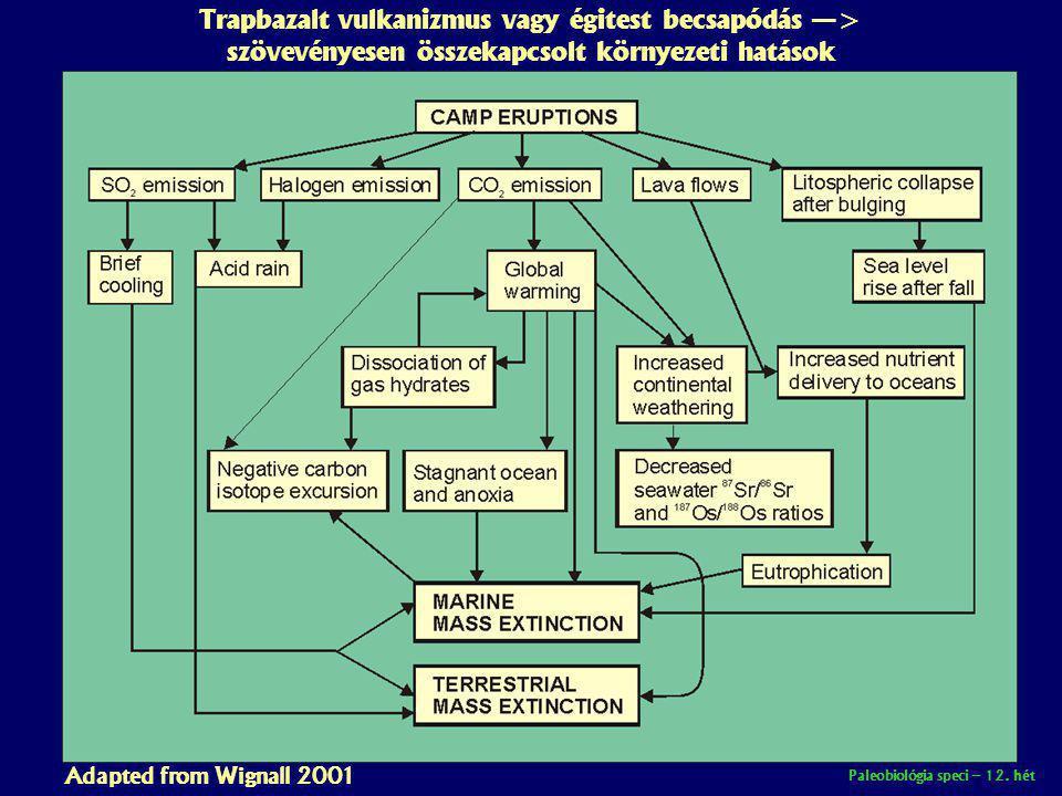Paleobiológia speci – 12. hét Trapbazalt vulkanizmus vagy égitest becsapódás —> szövevényesen összekapcsolt környezeti hatások Adapted from Wignall 20