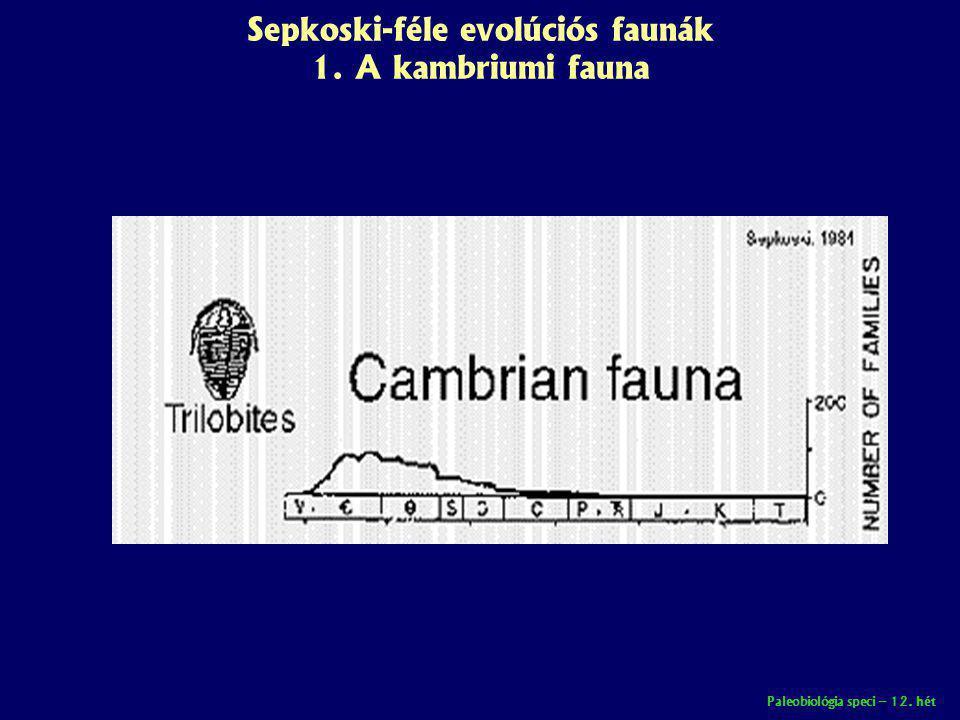 Paleobiológia speci – 12. hét Sepkoski-féle evolúciós faunák 1. A kambriumi fauna