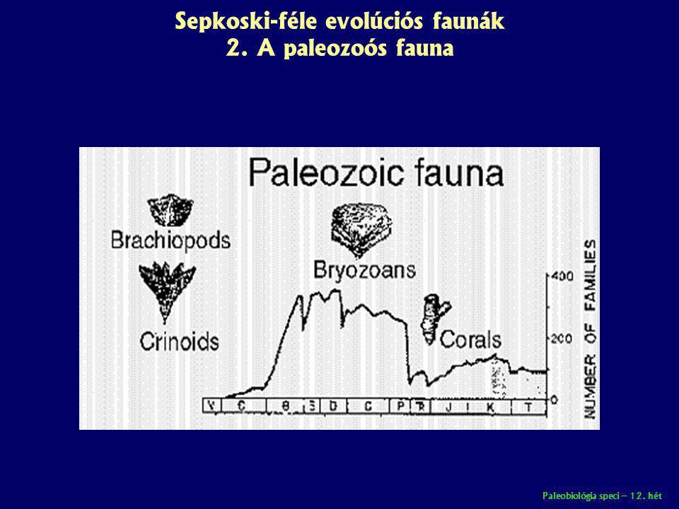 Paleobiológia speci – 12. hét Sepkoski-féle evolúciós faunák 2. A paleozoós fauna