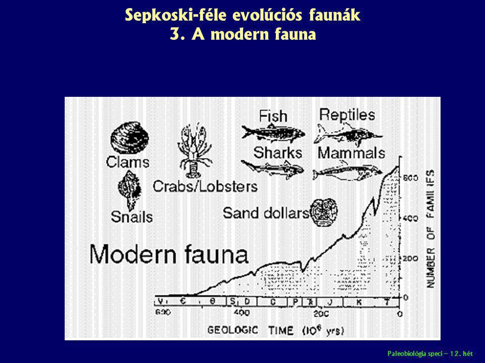 Paleobiológia speci – 12. hét Sepkoski-féle evolúciós faunák 3. A modern fauna