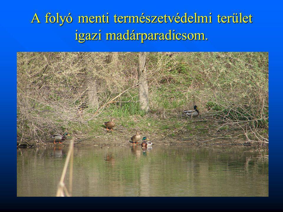 A folyó menti természetvédelmi terület igazi madárparadicsom.