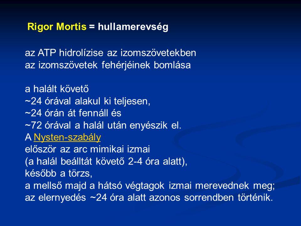 Rigor Mortis = hullamerevség az ATP hidrolízise az izomszövetekben az izomszövetek fehérjéinek bomlása a halált követő ~24 órával alakul ki teljesen,