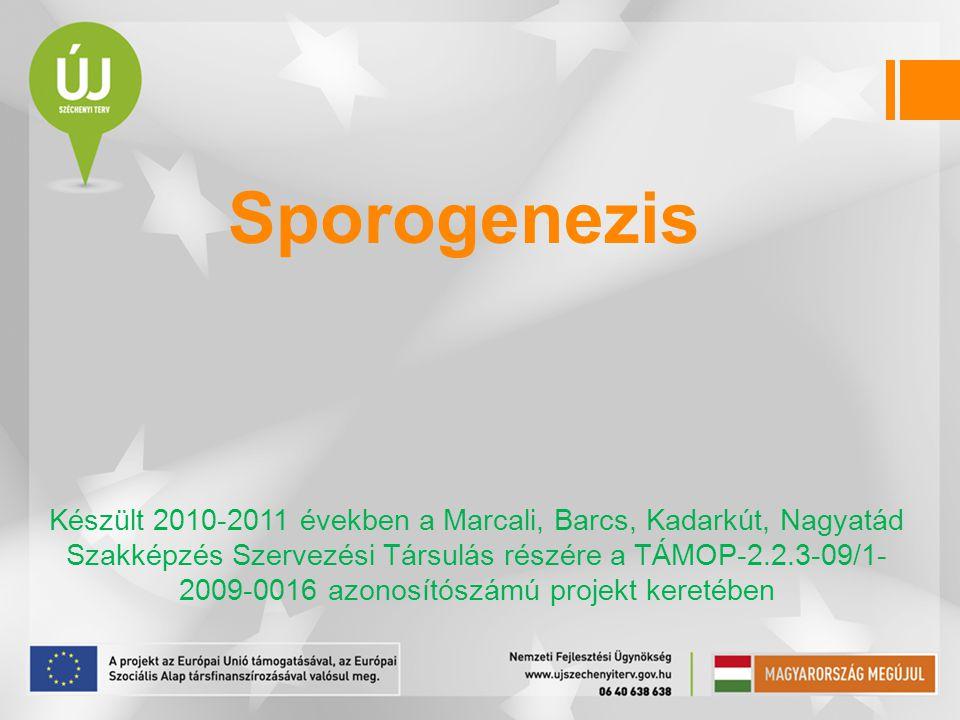 Sporogenezis Készült 2010-2011 években a Marcali, Barcs, Kadarkút, Nagyatád Szakképzés Szervezési Társulás részére a TÁMOP-2.2.3-09/1- 2009-0016 azono