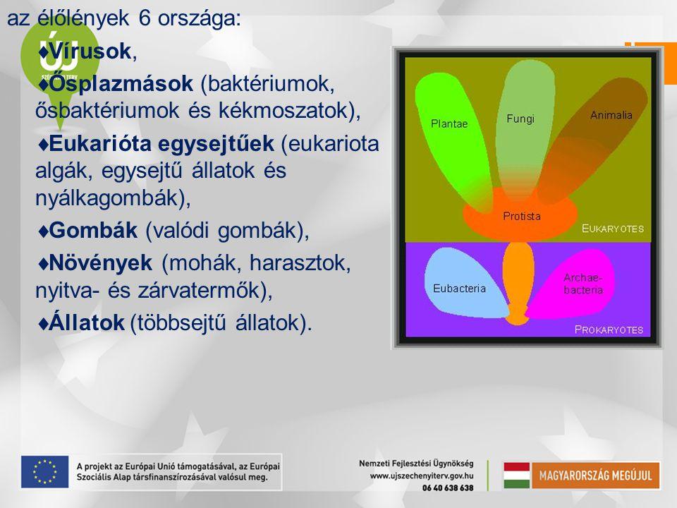 az élőlények 6 országa:  Vírusok,  Ősplazmások (baktériumok, ősbaktériumok és kékmoszatok),  Eukarióta egysejtűek (eukariota algák, egysejtű állato