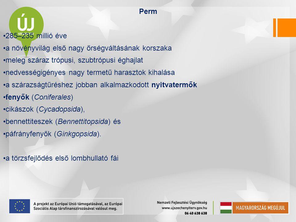 Perm 285–235 millió éve a növényvilág első nagy őrségváltásának korszaka meleg száraz trópusi, szubtrópusi éghajlat nedvességigényes nagy termetű hara