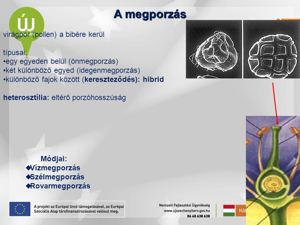 """Nemzedékváltakozások A növényegyed életciklusa: gametofiton: ivarsejtek sporofiton: ivartalan szaporítósejtek ez a két szakasz a két nemzedék Tendencia: a gametofiton egyre kisebb, rövidebb életű és a sporofitonon """"élősködik"""