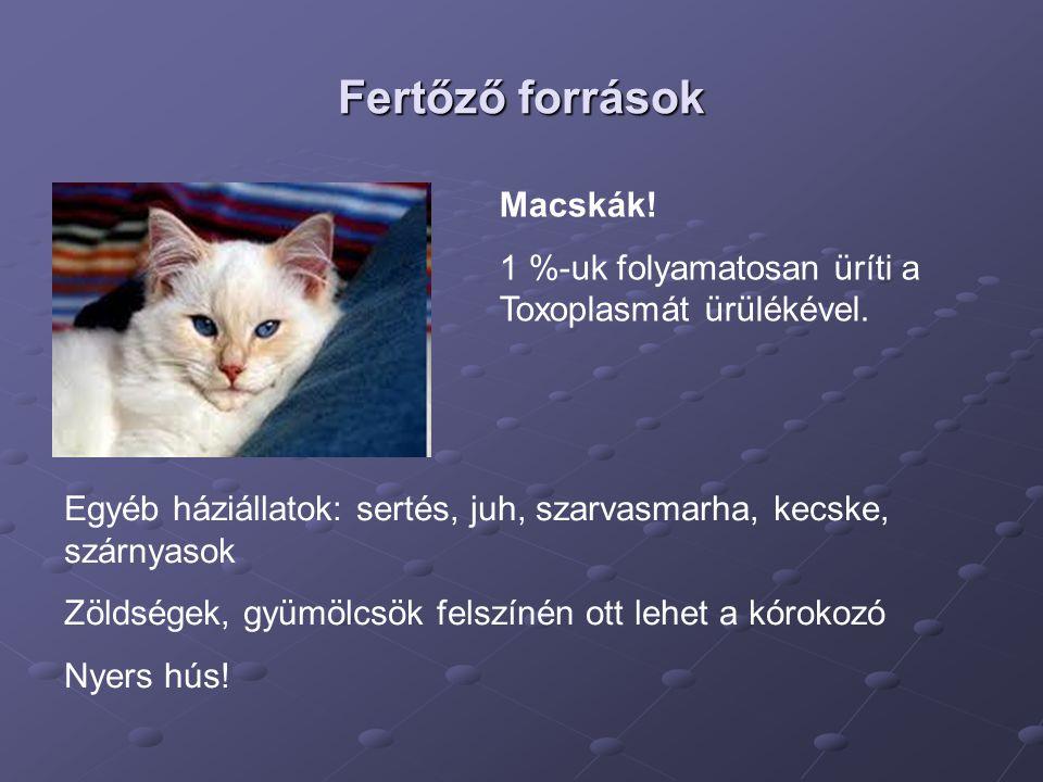 Anyai infekció primer prevenciója Macskákkal való kontaktus kerülése.