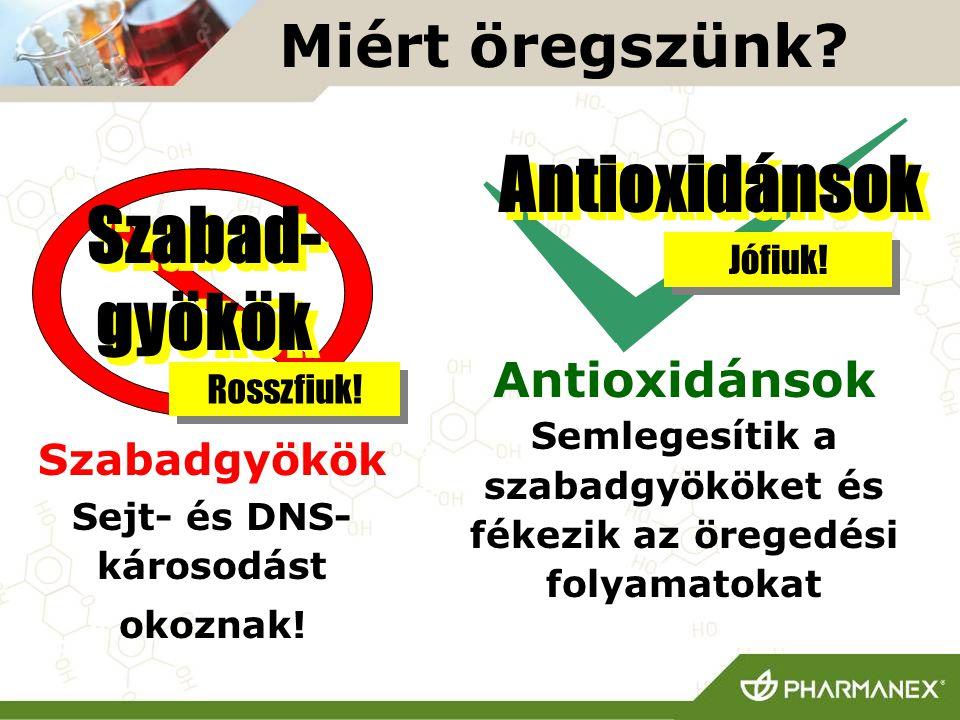 Miért öregszünk? Szabadgyökök Sejt- és DNS- károsodást okoznak! Antioxidánsok Semlegesítik a szabadgyököket és fékezik az öregedési folyamatokat Szaba