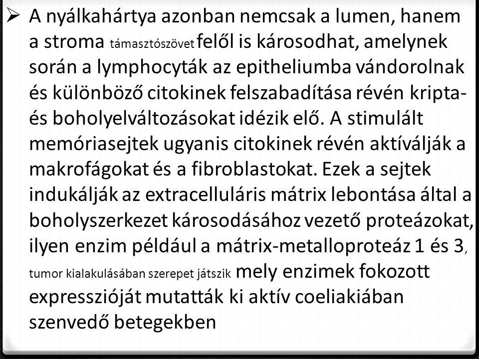  A nyálkahártya azonban nemcsak a lumen, hanem a stroma támasztószövet felől is károsodhat, amelynek során a lymphocyták az epitheliumba vándorolnak