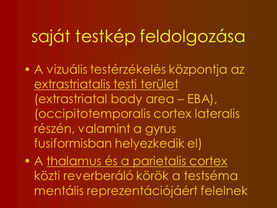 Anorexiások testképzavara 1.