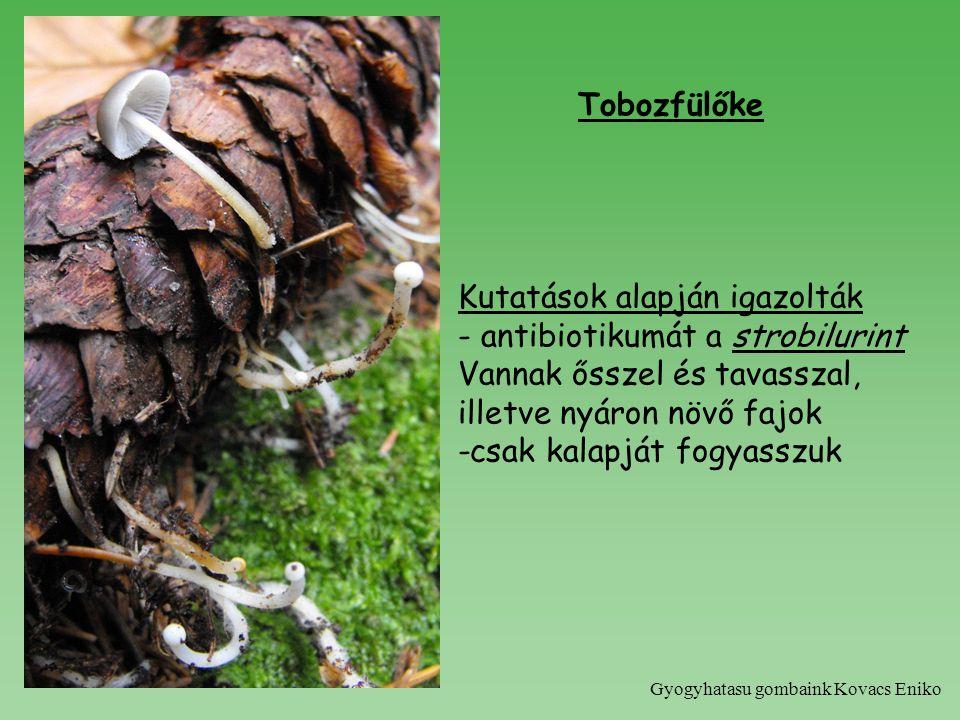 Tobozfülőke Kutatások alapján igazolták - antibiotikumát a strobilurint Vannak ősszel és tavasszal, illetve nyáron növő fajok -csak kalapját fogyasszuk Gyogyhatasu gombaink Kovacs Eniko