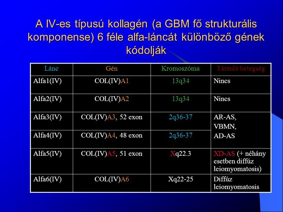 Miután mindegyikből 2 db kromoszómája van mindenkinek, és ha csak az egyik kromoszómán örököl A3 vagy A4 láncgén mutációt ez nála és a szülőnél is csak hematuriát okoz.