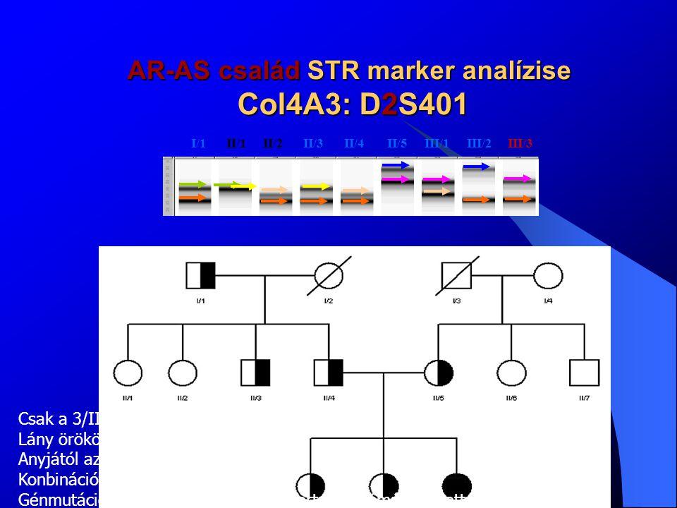 AR-AS család STR marker analízise A marker vizsgálat az X kromoszómához való kapcsoltságot kizárta A 2-es kromoszómán csak az A3 lánc markere volt informatív, ami alátámasztja az AR-AS-t –A tünetek a hordozókban csak VBMN-el járnak, a compound heterozigóta AR-AS-es lányban az A3 vagy A4 láncok két allélján történt mutáció