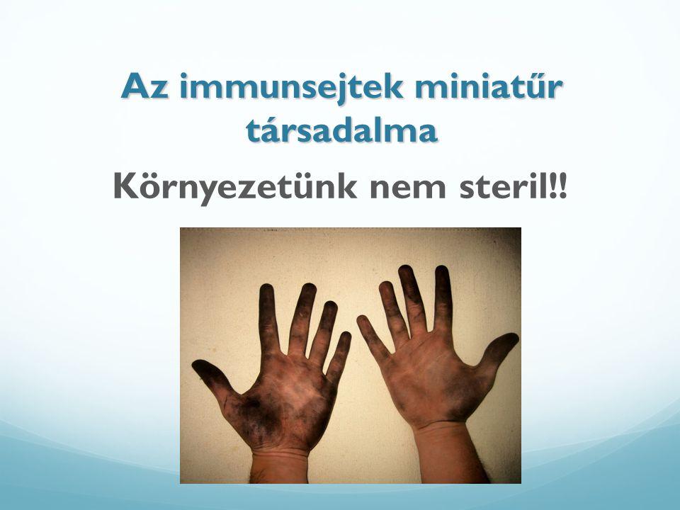 Az immunsejtek miniatűr társadalma Környezetünk nem steril!!