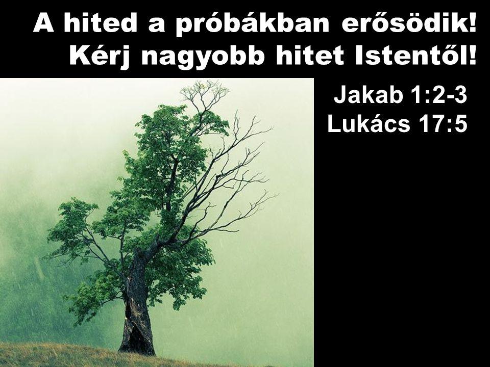 Jakab 1:2-3 Lukács 17:5 A hited a próbákban erősödik! Kérj nagyobb hitet Istentől!