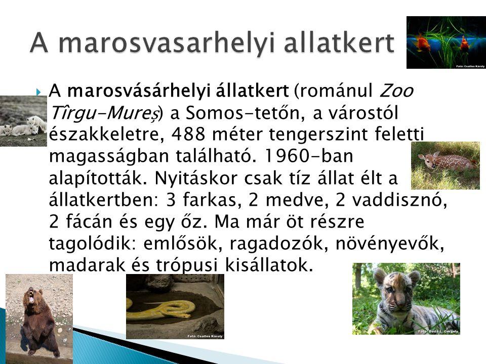  A marosvásárhelyi állatkert (románul Zoo Tîrgu-Mure) a Somos-tetőn, a várostól északkeletre, 488 méter tengerszint feletti magasságban található. 19