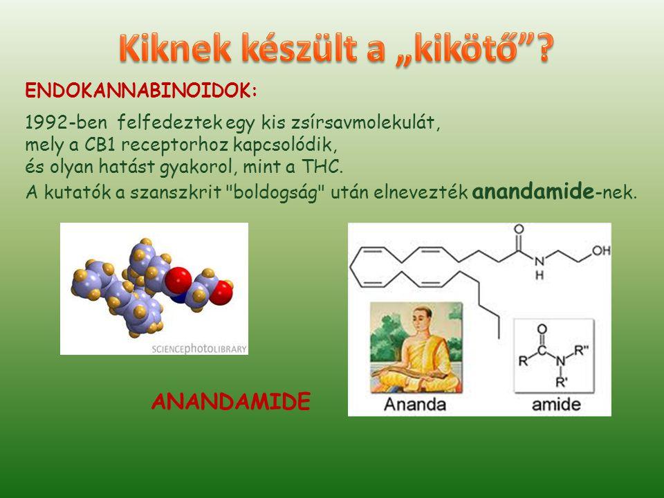 ENDOKANNABINOIDOK 2.: 1994-95-ben fedezték fel az agy másik belső kannabinoidját, amely a jóval kevésbé költői 2-arachidonoyl glycerol (2-AG) nevet kapta.