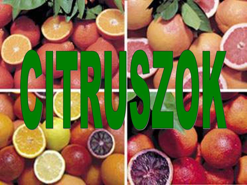 A világ legelterjedtebb gyümölcsfái: a citruszok A citruszok a rutafélék (Rutaceae) családjába tartoznak.