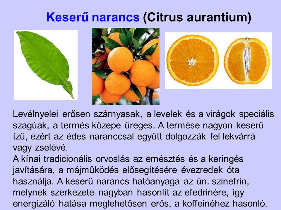 Keserű narancs (Citrus aurantium) Levélnyelei erősen szárnyasak, a levelek és a virágok speciális szagúak, a termés közepe üreges. A termése nagyon ke