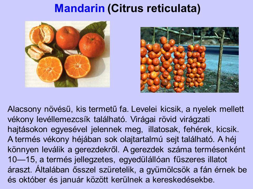 Mandarin (Citrus reticulata) Alacsony növésű, kis termetű fa. Levelei kicsik, a nyelek mellett vékony levéllemezcsík található. Virágai rövid virágzat