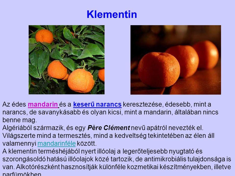 Az édes mandarin és a keserű narancs keresztezése, édesebb, mint a narancs, de savanykásabb és olyan kicsi, mint a mandarin, általában nincs benne mag