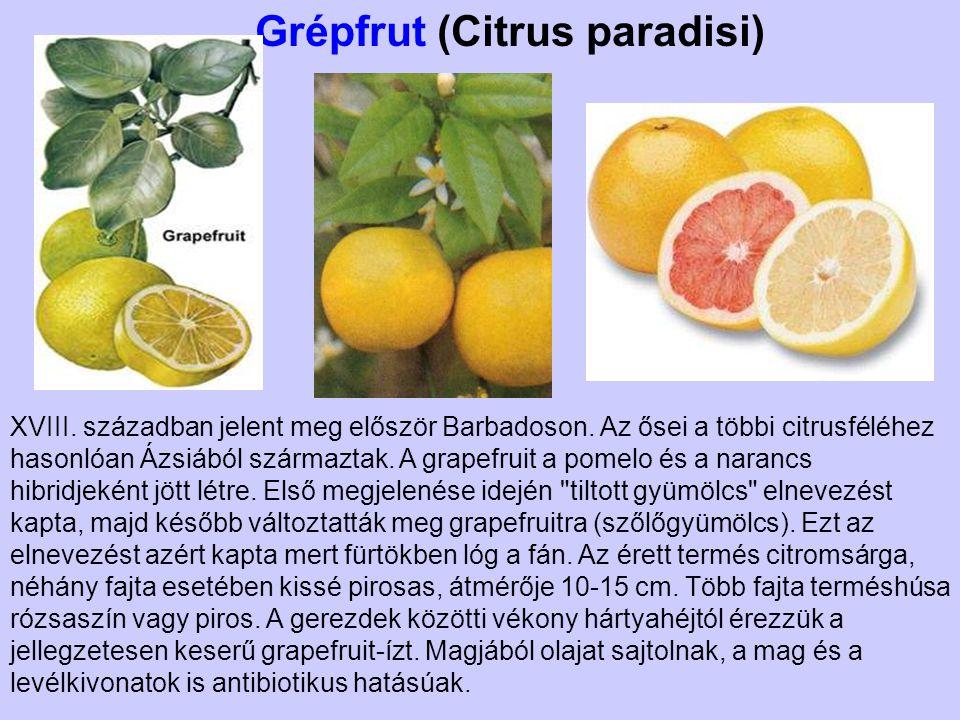 Grépfrut (Citrus paradisi) XVIII. században jelent meg először Barbadoson. Az ősei a többi citrusféléhez hasonlóan Ázsiából származtak. A grapefruit a