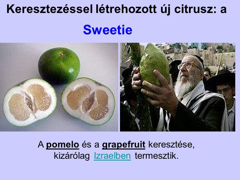 Keresztezéssel létrehozott új citrusz: a Sweetie A pomelo és a grapefruit keresztése, kizárólag Izraelben termesztik.Izraelben