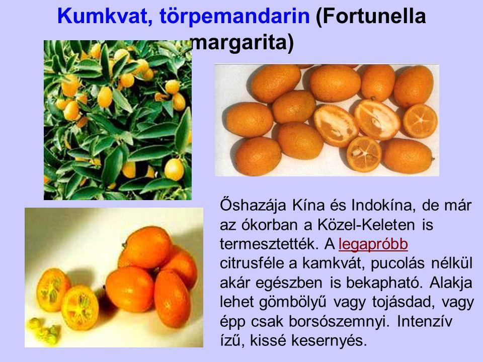 Kumkvat, törpemandarin (Fortunella margarita) Őshazája Kína és Indokína, de már az ókorban a Közel-Keleten is termesztették. A legapróbb citrusféle a