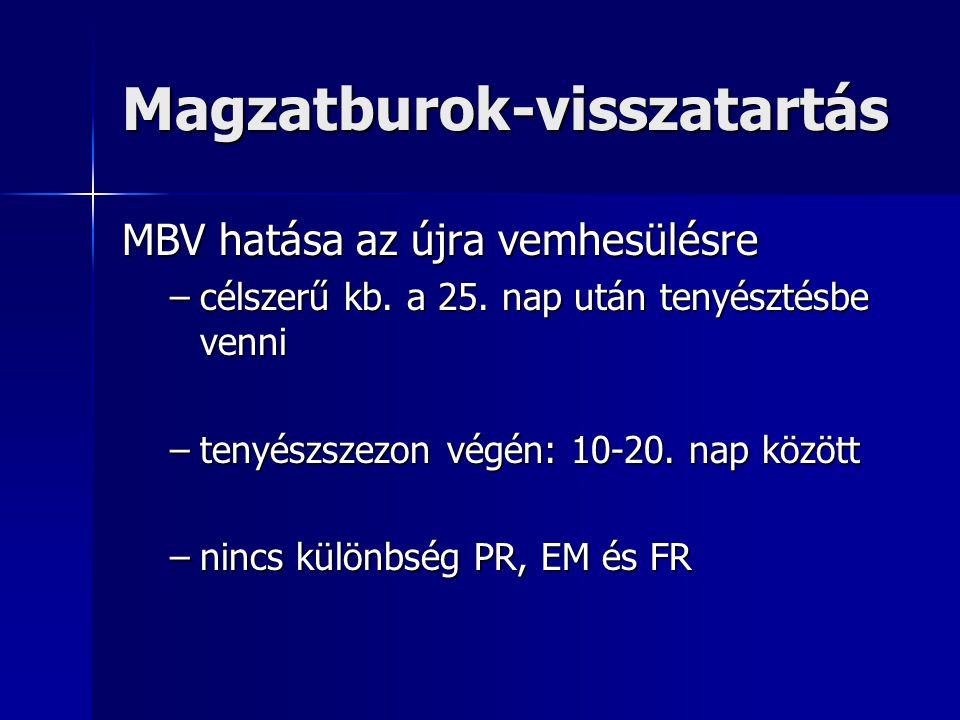 Magzatburok-visszatartás MBV hatása az újra vemhesülésre –célszerű kb.