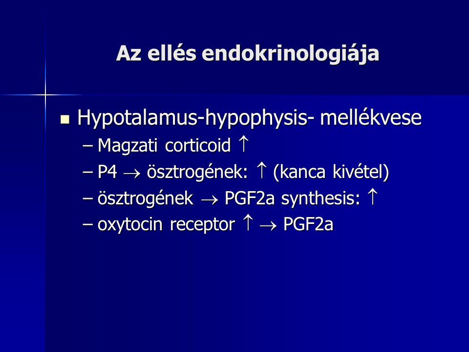 Az ellés endokrinologiája Hypotalamus-hypophysis- mellékvese Hypotalamus-hypophysis- mellékvese –Magzati corticoid  –P4  ösztrogének:  (kanca kivétel) –ösztrogének  PGF2a synthesis:  –oxytocin receptor   PGF2a