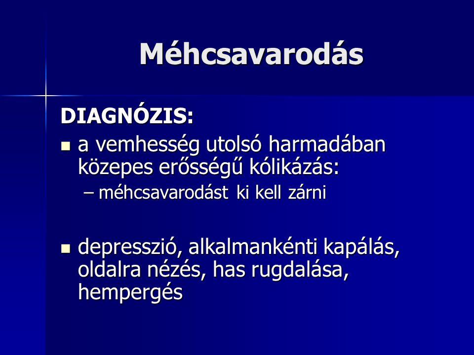 Extrauterin haemorrhagia Klinikai tünet: kólika, leizzadás, gyors pulzus, anémia, elhullás kólika, leizzadás, gyors pulzus, anémia, elhullás