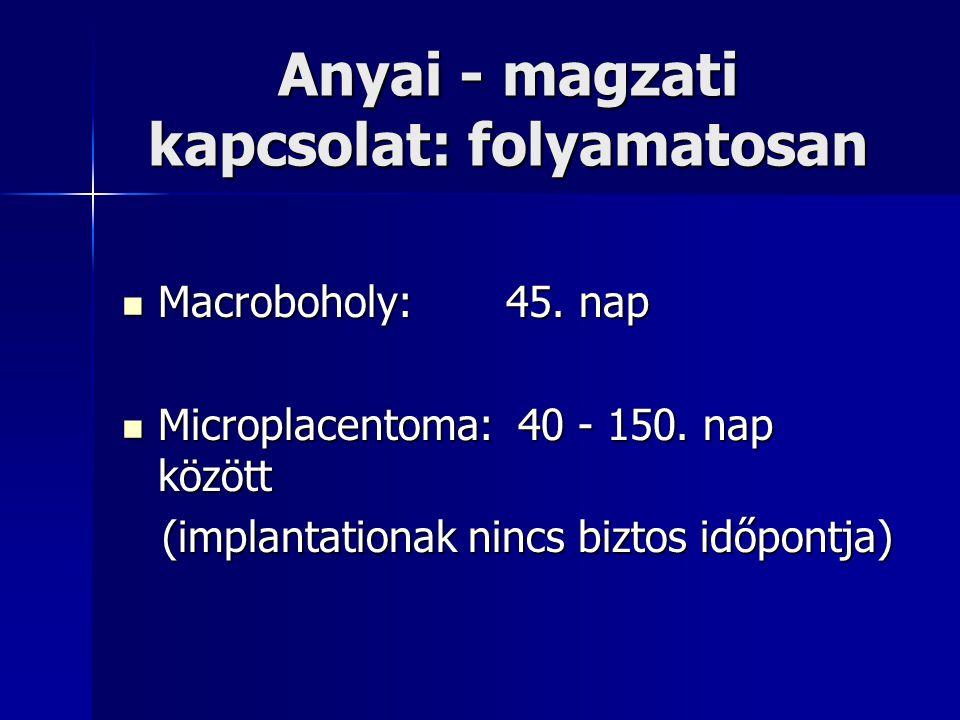 Anyai - magzati kapcsolat: folyamatosan Macroboholy:45. nap Macroboholy:45. nap Microplacentoma: 40 - 150. nap között Microplacentoma: 40 - 150. nap k