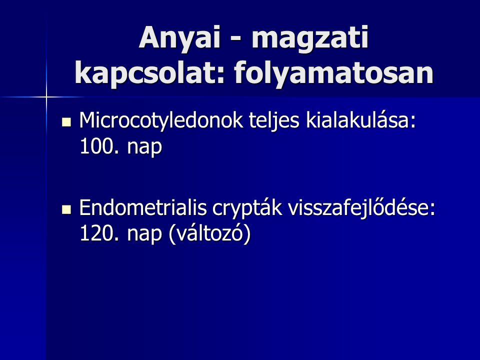 Anyai - magzati kapcsolat: folyamatosan Microcotyledonok teljes kialakulása: 100. nap Microcotyledonok teljes kialakulása: 100. nap Endometrialis cryp
