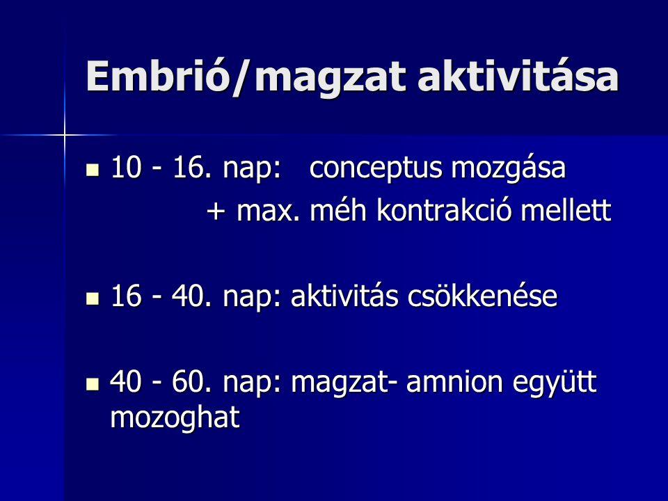 Embrió/magzat aktivitása 10 - 16. nap: conceptus mozgása 10 - 16. nap: conceptus mozgása + max. méh kontrakció mellett + max. méh kontrakció mellett 1