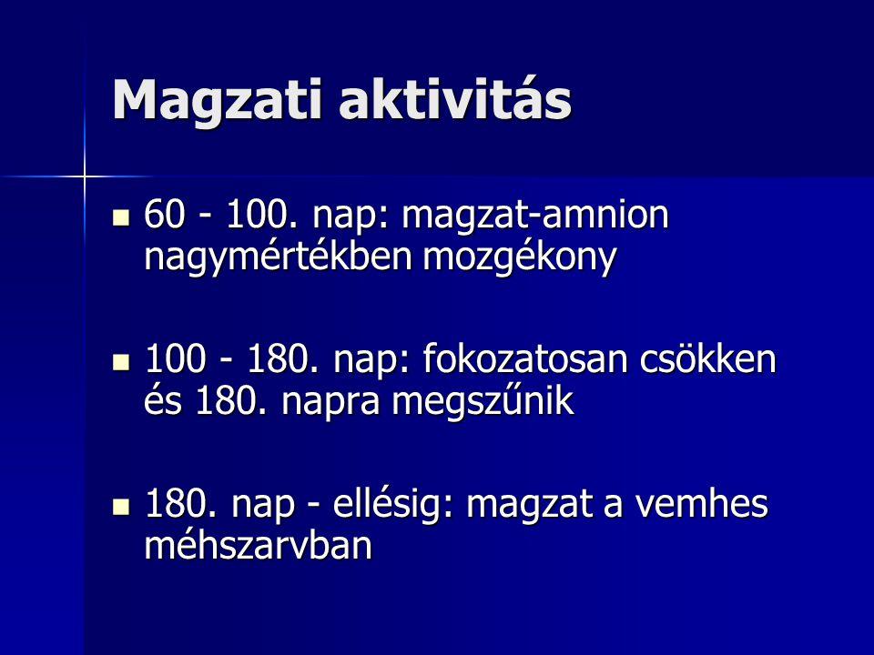 Magzati aktivitás 60 - 100. nap: magzat-amnion nagymértékben mozgékony 60 - 100. nap: magzat-amnion nagymértékben mozgékony 100 - 180. nap: fokozatosa