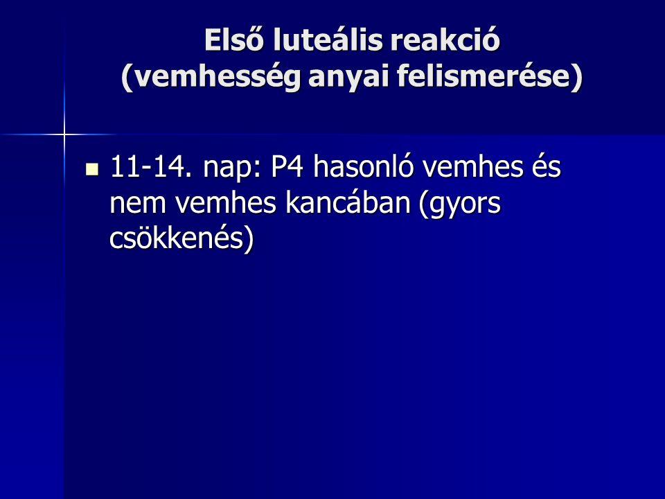 Első luteális reakció (vemhesség anyai felismerése) 11-14. nap: P4 hasonló vemhes és nem vemhes kancában (gyors csökkenés) 11-14. nap: P4 hasonló vemh