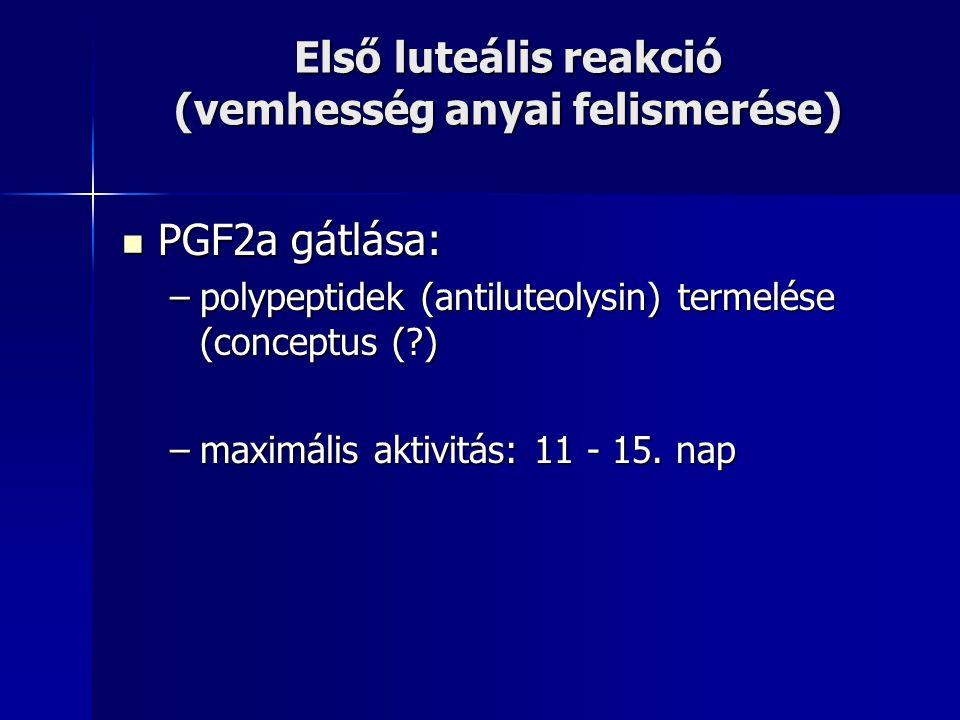 PGF2a gátlása: PGF2a gátlása: –polypeptidek (antiluteolysin) termelése (conceptus (?) –maximális aktivitás: 11 - 15. nap Első luteális reakció (vemhes