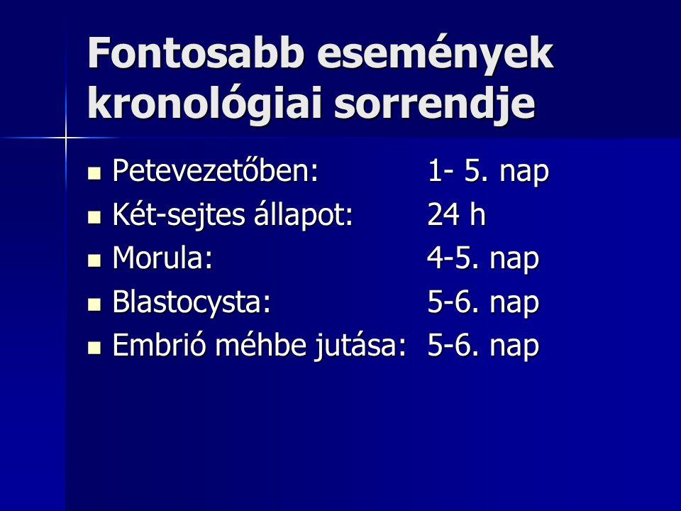 Blastociszta állapot: 6-10.nap Zona pellucida leválása:7.