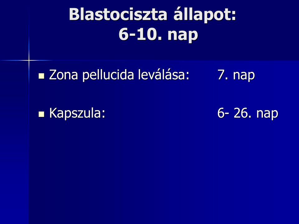 Blastociszta állapot: 6-10. nap Zona pellucida leválása:7. nap Zona pellucida leválása:7. nap Kapszula:6- 26. nap Kapszula:6- 26. nap