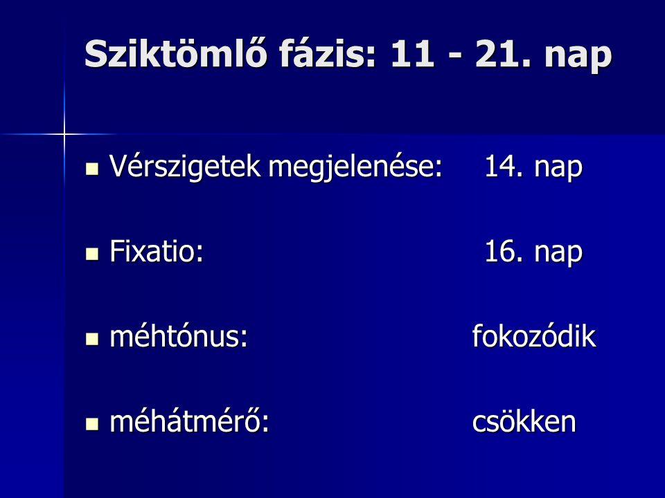 Sziktömlő fázis: 11 - 21. nap Vérszigetek megjelenése:14. nap Vérszigetek megjelenése:14. nap Fixatio:16. nap Fixatio:16. nap méhtónus: fokozódik méht